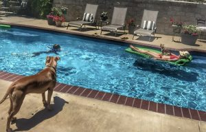 Dream house pool with dogs and kid playing